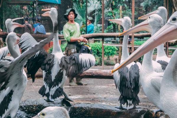 Kebun Binatang Surabaya terbaru